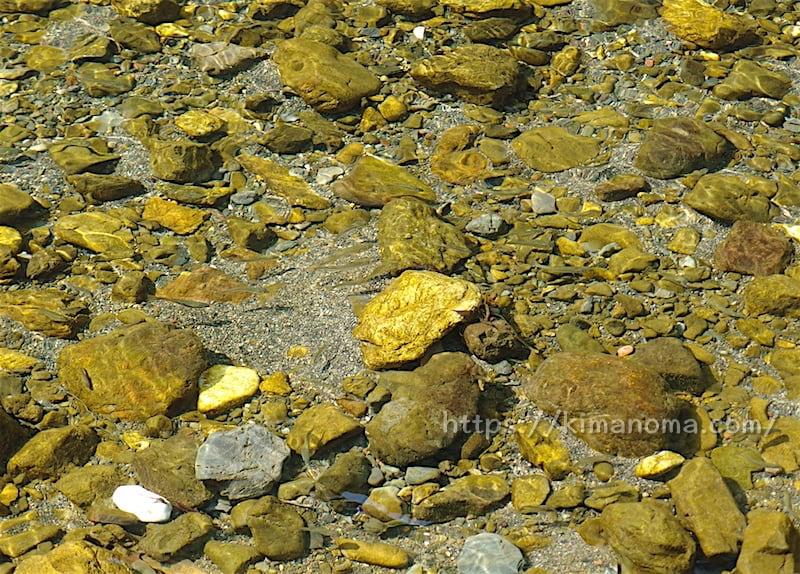 巾着田の河原の魚