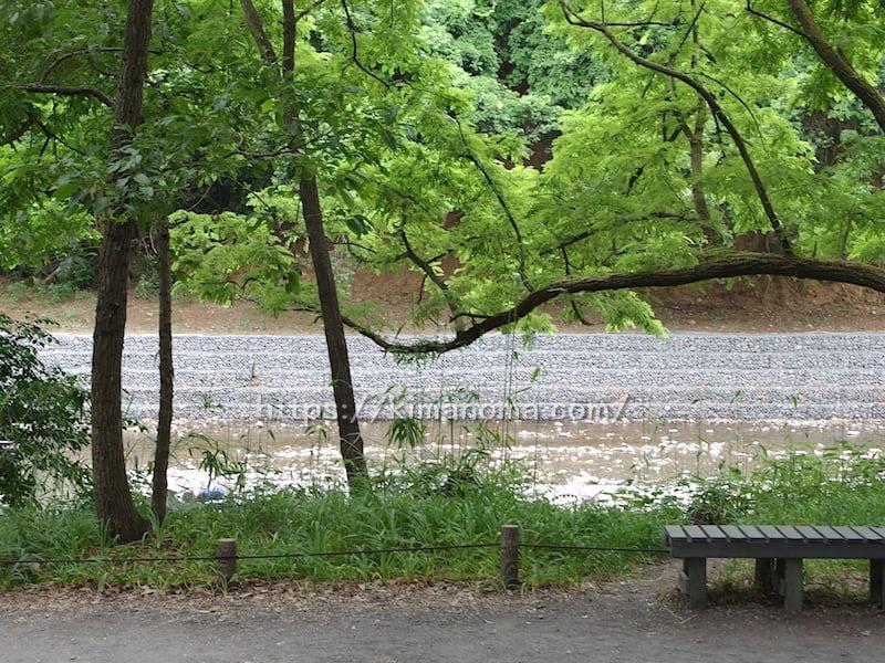 遊歩道から見る巾着田河原
