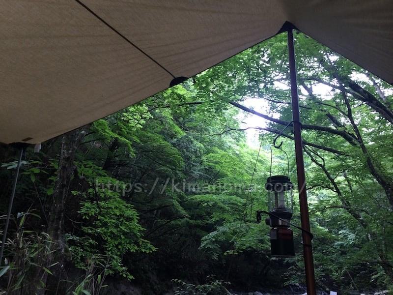 タープと木々